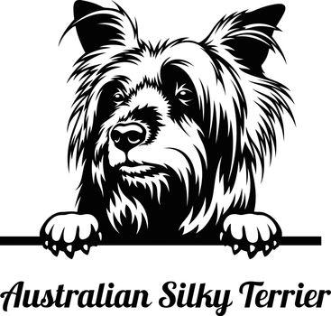 Peeping dog is a Australian Silky Terrier breed.