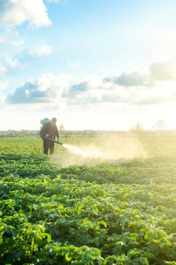 Farmer with a mist sprayer blower processes the potato plantation. Protection and care. Use of industrial chemicals to protect crops from insects and fungi. Environmental damage and chemical pollution