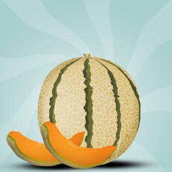 illustration of melon