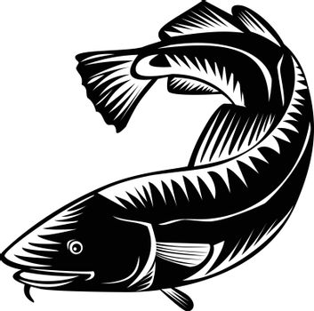 Woodcut style illustration of an Atlantic cod Gadus morhua, a benthopelagic fish of family Gadidae commercially known as cod or codling viewed from side on isolated background in black and white.