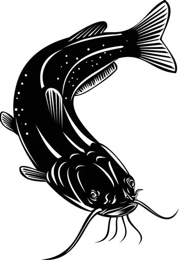 Retro woodcut style illustration of a channel catfish Ictalurus punctatus or channel cat, North America's most numerous catfish species, swimming down on isolated background done in black and white.