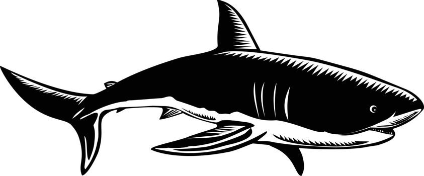 Retro woodcut style illustration of a great white shark Carcharodon carcharias, white shark or white pointer, a species of large mackerel shark side view done in black and white.