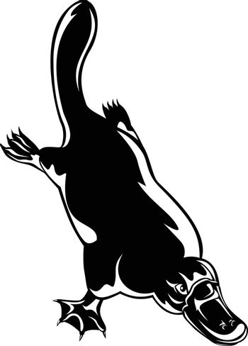 Retro woodcut style illustration of a duck-billed platypus Ornithorhynchus anatinus, a semiaquatic egg-laying mammal endemic to eastern Australia diving down on isolated background in black and white.