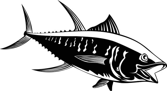 Retro style illustration of a yellowfin tuna thunnus albacares or ahi, a species of tuna found in pelagic waters of tropical and subtropical oceans on isolated background done in black and white.