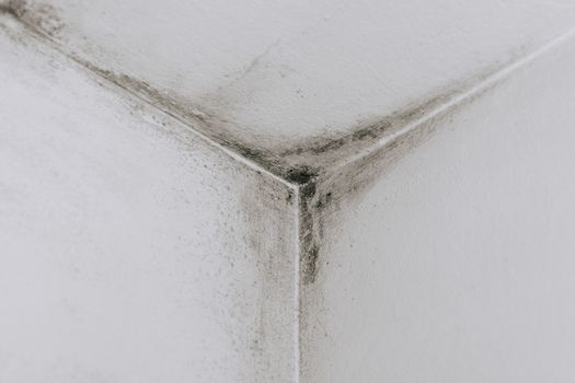 Mold on the walls corner in the room stock photo
