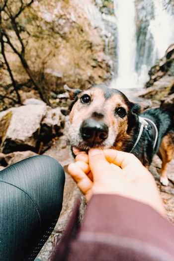 Cute dog being feed in front of a waterfall