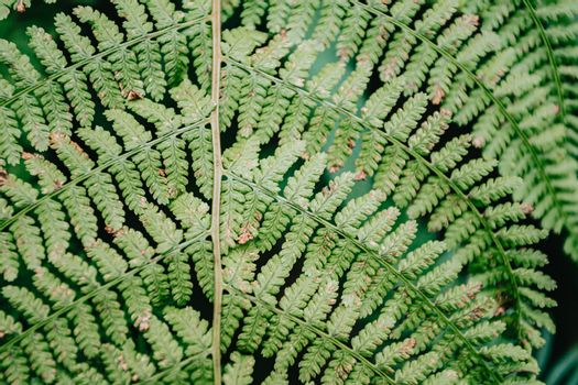 Close up of a fern with super texture