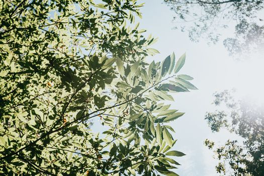 Leaves with a bright sky as the background