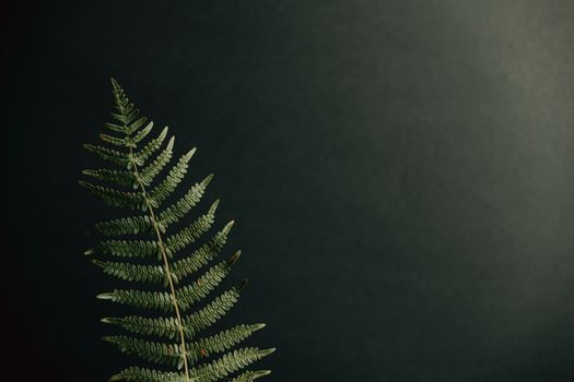 A single fern over a black background with copy space