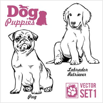 Pug and Labrador Retriever - Dog Puppies. Vector set. Funny dogs puppy pet characters different breads doggy illustration isolated on white.