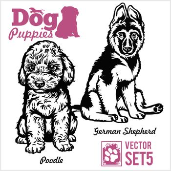 Poodle and German Shepherd - Dog Puppies. Vector set. Funny dogs puppy pet characters different breads doggy illustration isolated on white.