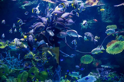Diver feeding fishes under water