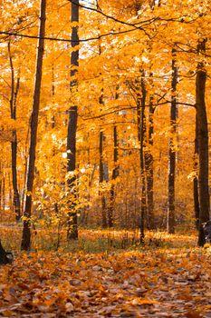 Autumn park lanscape