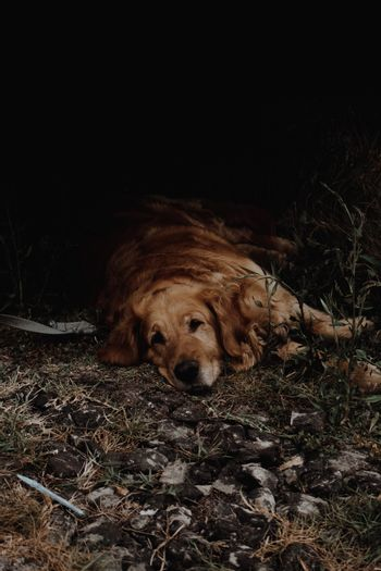 Brown dog resting on the floor during a hiking route