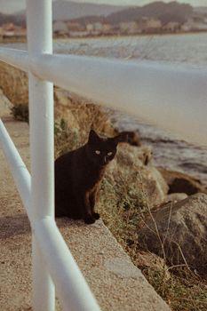 Black cat on vintage tones in the docks