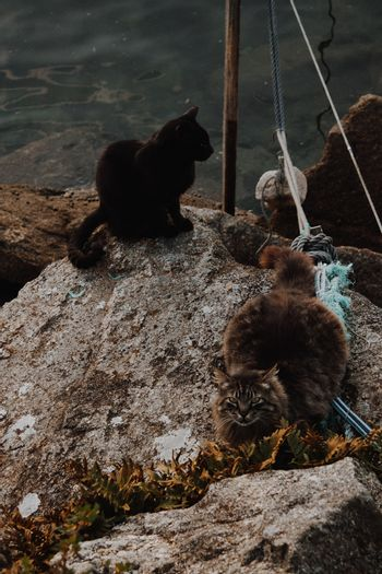 Two cute and furry cats in the docks of the city