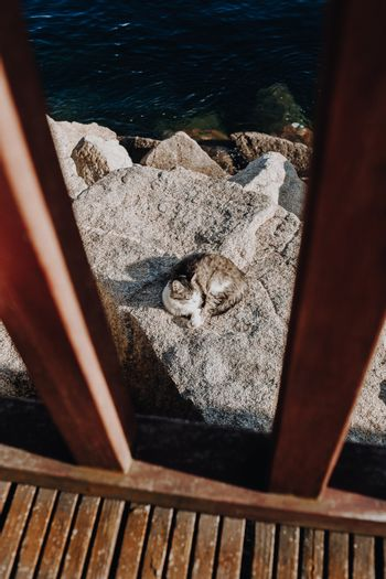 Grey cat resting on the rocks of the docks during a sunny day