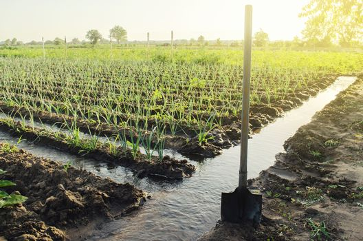 Irrigation canals with water on the plantation field. Water supply system, cultivation in arid regions. Agronomy. Rural countryside. European farm, farming. Caring for plants