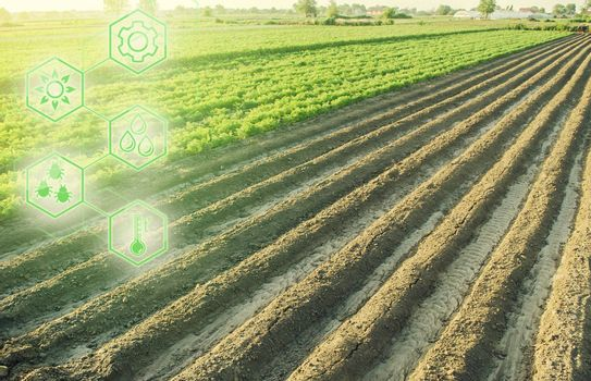 Landscape of a farm plantation field and hexagons with innovations. Science of agronomy. Improvement yield quality. Reducing the impact on environment. European organic farming.