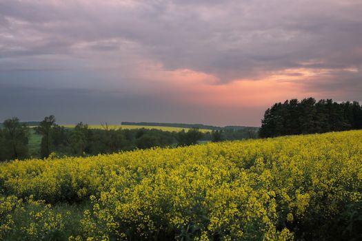 yellow hills