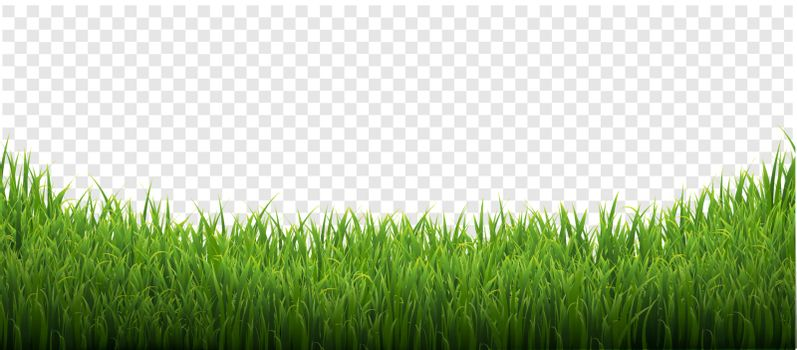 Green Grass Isolated Transparent Background With Gradient Mesh, Vector Illustration