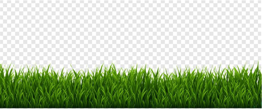 Green Grass Frame And Isolated Transparent Background, Vector Illustration