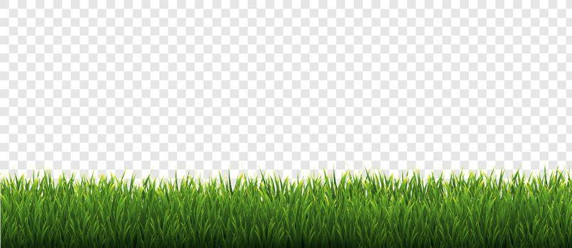 Green Grass Border Transparent Background, Vector Illustration