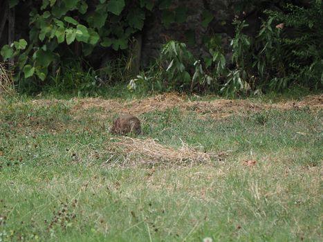hare mammal animal
