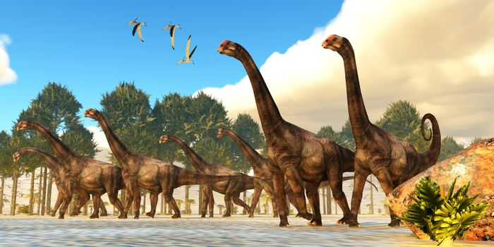 A flock of Pteranodon reptiles fly over a herd of Brontomerus dinosaurs during the Cretaceous Period.