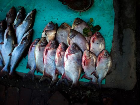 Fisah for sale available in fish market