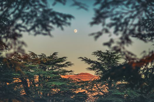 Amazing Landscape of a Beautiful Cedars Forest on the Lebanese Mountains. Camping. Moon rise. Lebanon