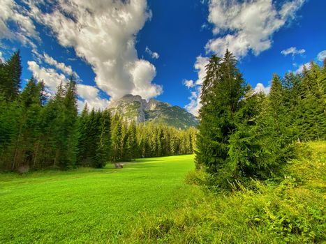 Beautiful forest of Dolomite Mountains, Italy