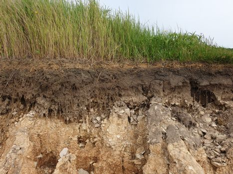 Cut soil with grass. Cross section of grass and soil