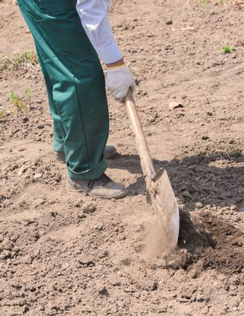 Farmer or employee working in the field. Farmer digs the ground