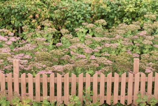 Flower bed with a fence. Wildflowers and picket fence.