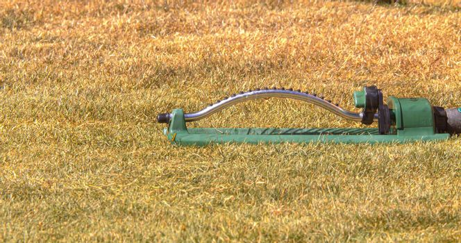 Watering dry yellow lawn grass after winter with oscillating sprinkler water host