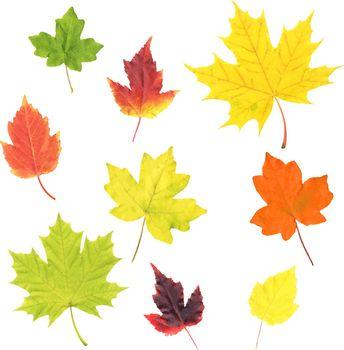 Autumn Leaves Set Isolated White Background, Vector Illustration