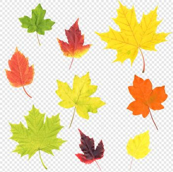 Autumn Leaves Set Isolated Transparent Background, Vector Illustration