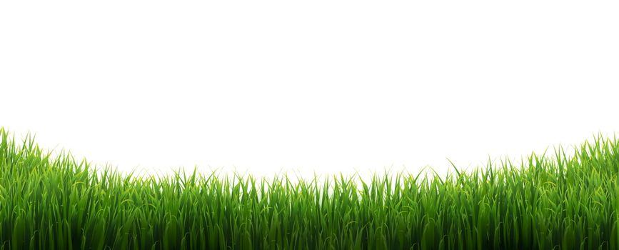 Green Grass Border Isolated White Background, Vector Illustration