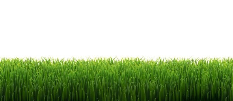 Green Grass Frame Isolated With White Background, Vector Illustration