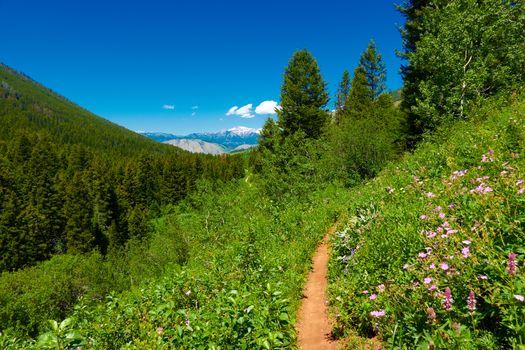 Cache Creek mountain bike trail outside of Jackson, Wyoming.