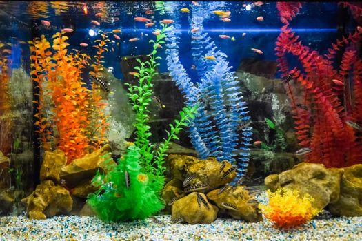 Wall mounted aquarium with tropical fish and algae.