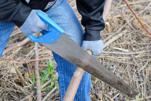 Sawing with a hand saw of a wood branch.