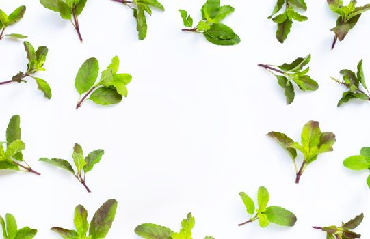 Frame made of holy basil leaves on white background. Top view