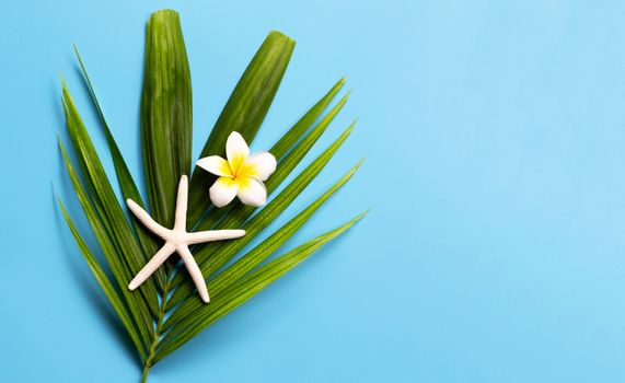 Starfish with plumeria or frangipani flower on tropical palm leaves on blue background. Enjoy summer holiday concept. Copy space
