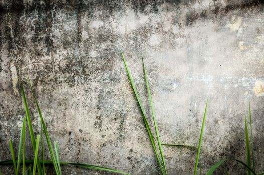 Dirty gray wall with black stains. Green grass near stonewall of old building. Seamless background. Moldy panel of house with plants in foreground. Rustic texture with dark spots. Urban exterior.