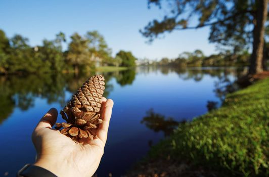 Human hand holding pine cone next to the lake