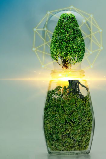 Abstract Light Bulbs and Trees Clean Energy Concept, Sustainable Environmental Conservation for Future Generation.