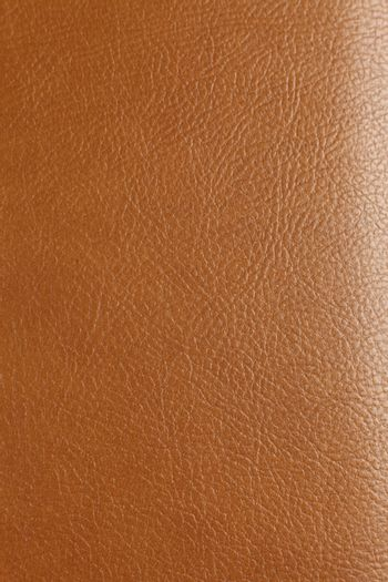 texture of the animal skin