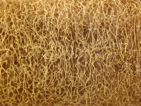 texture of a close up luffa